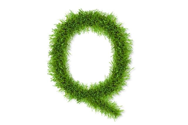nouns-that-start-with-q